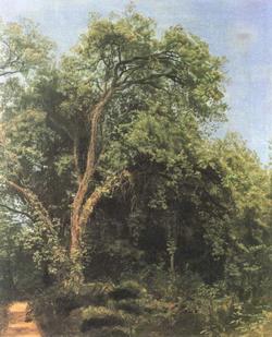 Дерево в парке Гиджи ( А. Иванов, 1840-е гг.)