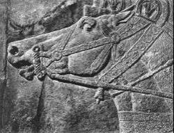 Голова лошади (барельеф)