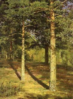 Сосны, освещенные солнцем (Шишкин И.И., етюд, 1886)